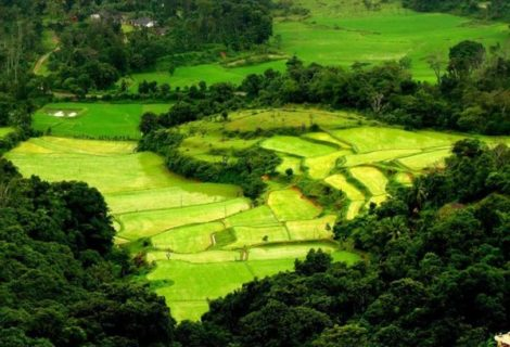 Ooty sight seeing one day tour
