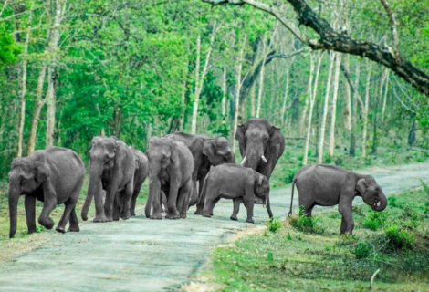 Mysore  Bandipur One Day Car Packages